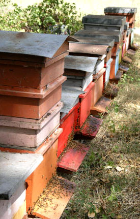 Beehives and feeders